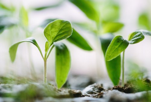 Making Your Home or Garden Business Succeed Online